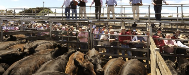 Cattle auction Wondonga